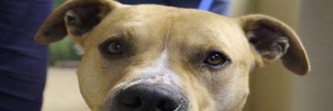 Vyřešeno! Nespravedlivě obviněný a uvězněný pes se po roce může vrátit zpět ke své rodině
