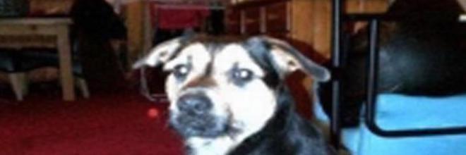 Ukradené štěně znovu se svou rodinou