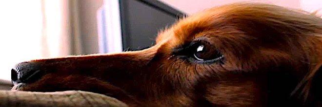 Nepopsatelné shledání majitelů se psy, kteří čekali opravdu dlouhou dobu