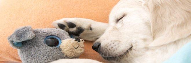 Tohle je nejlepší způsob, jak ubytovat své štěně v novém domově