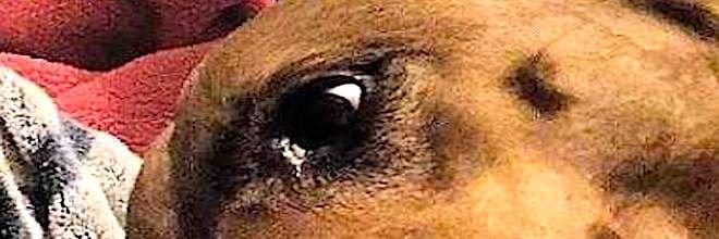 Lidé si lámou hlavu, co je na téhle fotografii psa špatně
