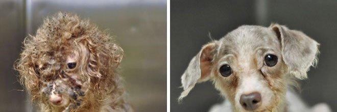 11x PŘED a POTÉ: proměny zachráněných psů