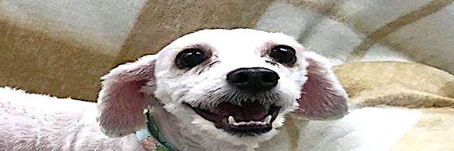 Pes z ulice po svém vysvobození už nikdy neskryl svůj úsměv