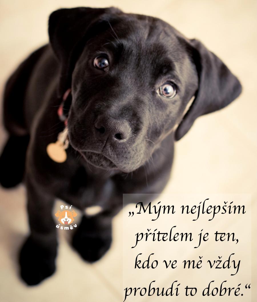 citáty o psech 10+ úžasných citátů o psech a lidech #2 ツ   Psí úsměv citáty o psech
