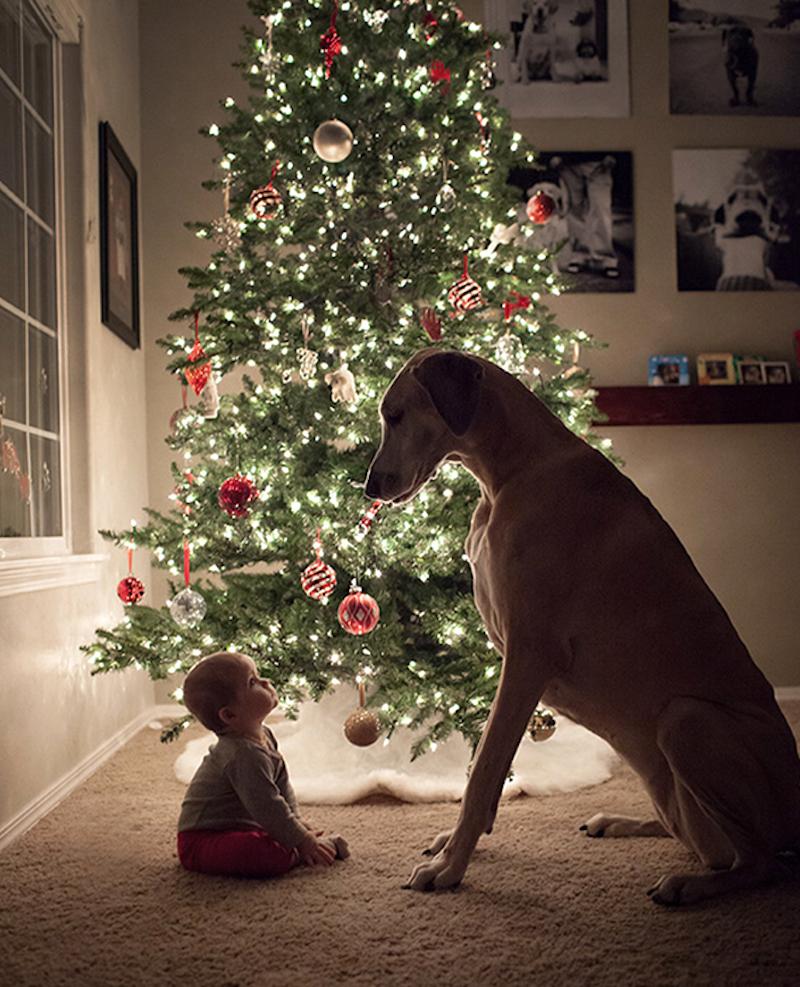 Dítě se psem, Vánoce
