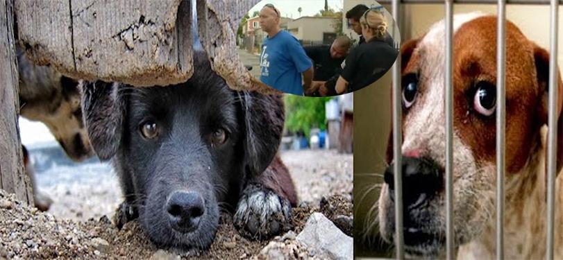Za osvobození psa skončil ve vězení