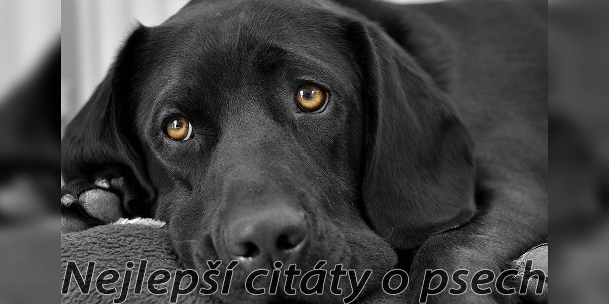 5+ citátů o psech, které si zapamatujete ツ