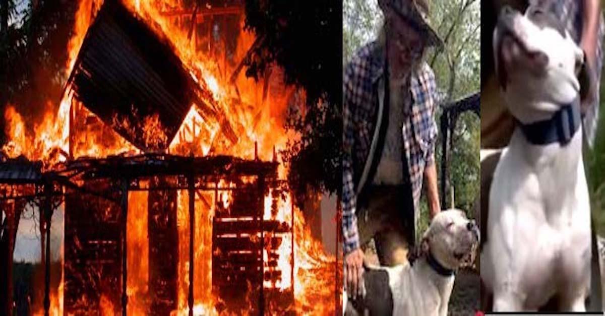 Oběť požáru zůstala na ulici, aby se mohla starat o psa