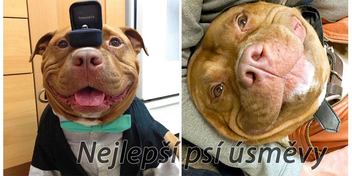 Pes se nemohl přestat smát poté, co byl adoptován z útulku