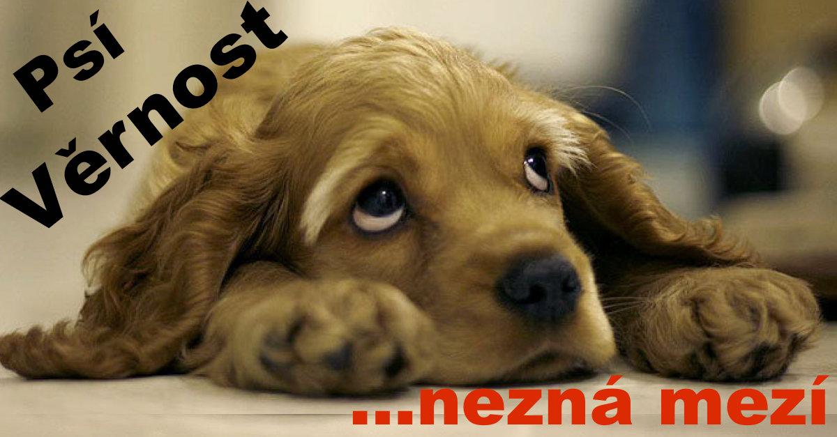 Věrný pes čeká na páníčka každý den, ale ten už se nevrátí