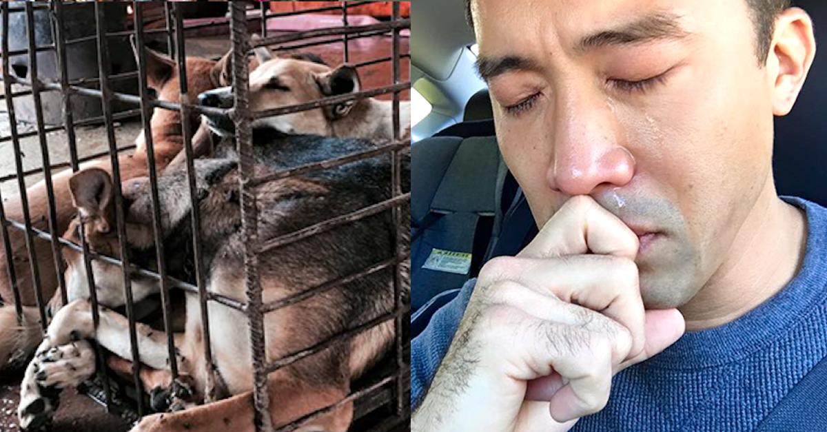 Zachránil 1000 psů z čínského festivalu, byl i zbit a zadržen