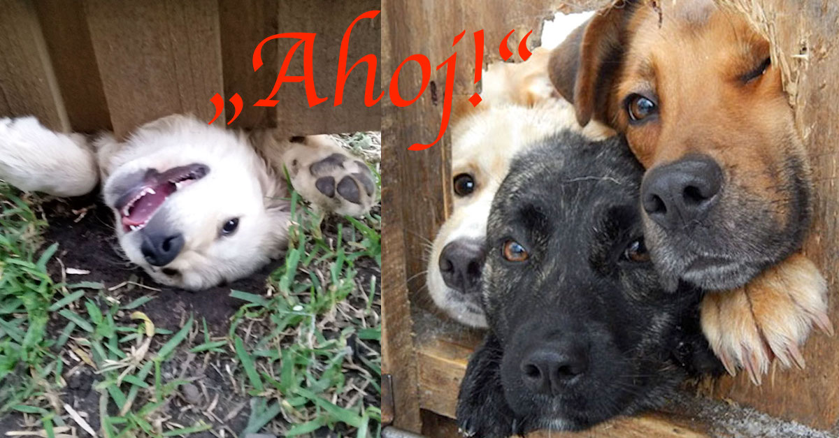 """10+ psů, kteří jen chtěli říct """"Ahoj!"""""""