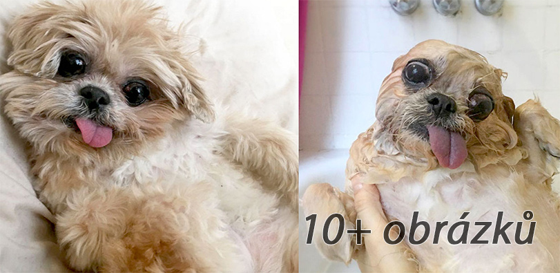 10+ zábavných psů PŘED a PO koupání