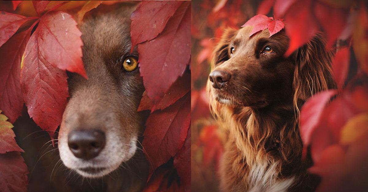 Fotografka zachytila úchvatné okamžiky, jak si psi užívají podzim