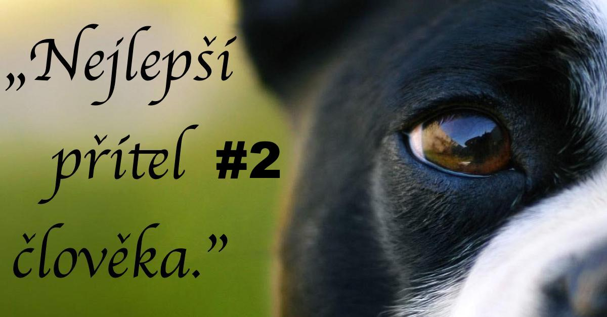 10+ úžasných citátů o psech a lidech #2 ツ