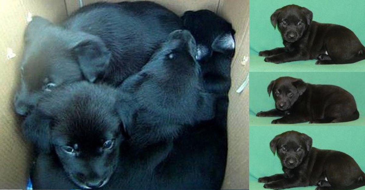 Neznámý majitel nechal v Brně opuštěná 4 měsíční štěňátka, pomozte jim najít nové majitele