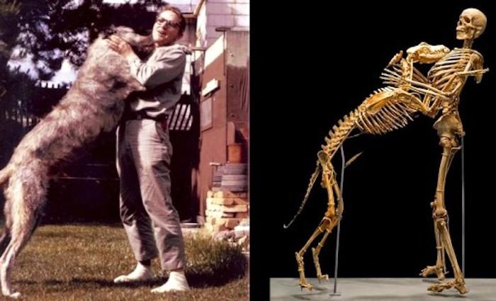 Antropolog daroval svoje tělo i tělo svého psa do muzea