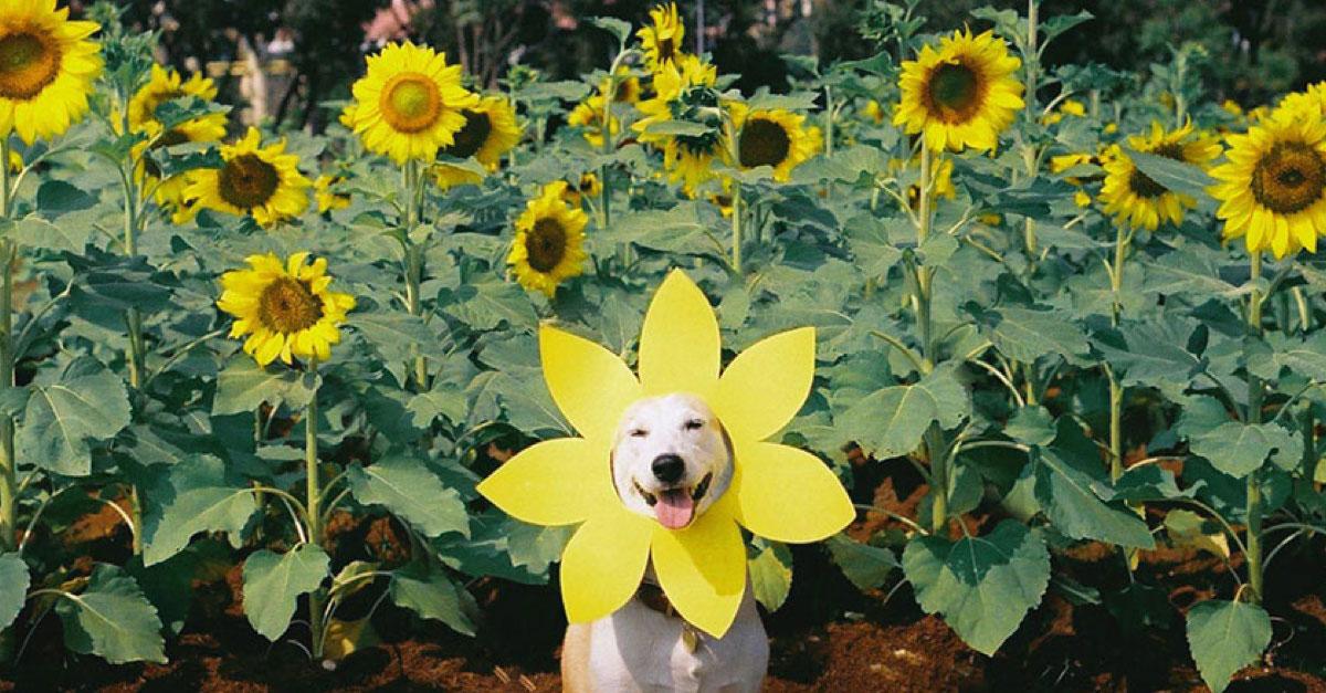 """Zachráněná fenka z ulice porazila rakovinu a stala se """"nejšťastnějším psem na světe"""""""