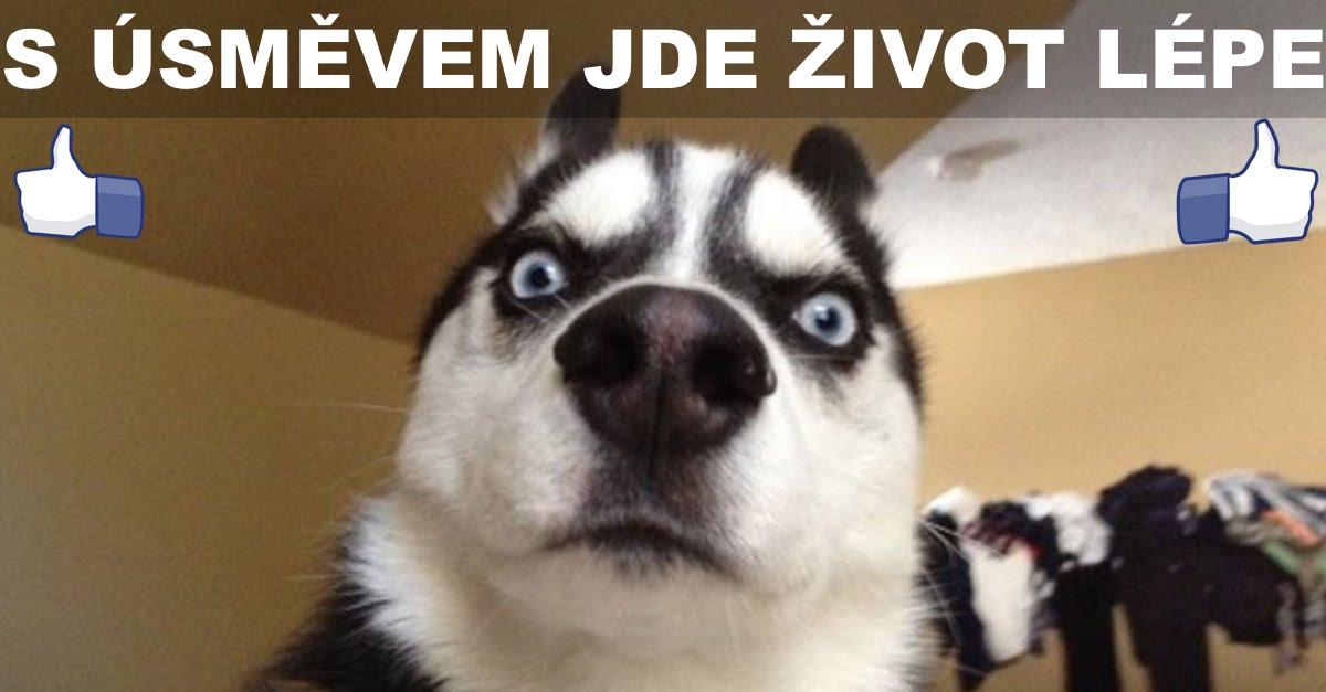 10+ psů, kteří Vás zaručeně rozesmějí! ツ