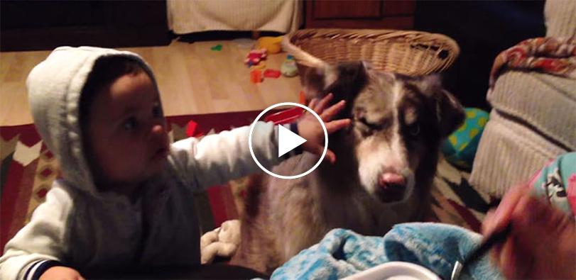 """Rodiče učí dítě říct """"máma"""", ale pes promluví první! (VIDEO)"""