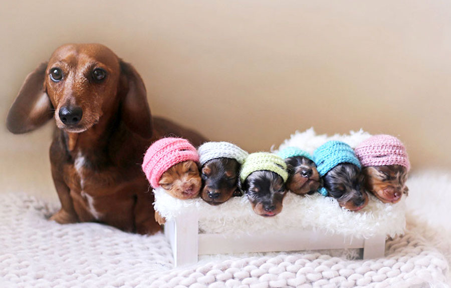 Hrdá fenka pózuje se svými štěňátky na první rodinné fotografii
