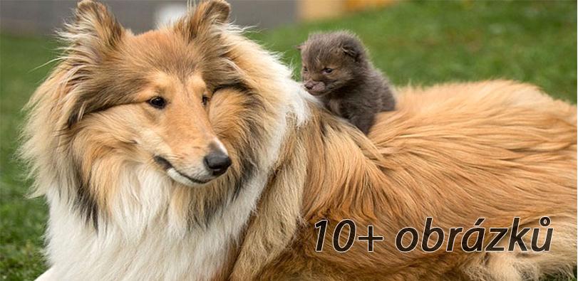 Pes adoptoval mládě lišky, když její matka zemřela při autonehodě