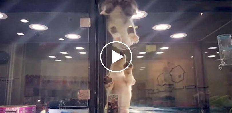 Kotě uteklo z klece, aby se dostalo za opuštěným psím kamarádem