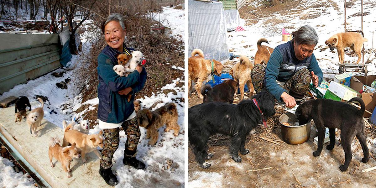26 let žije jen pro psy, hrobníkovi z lopaty vzala více než 200 psů