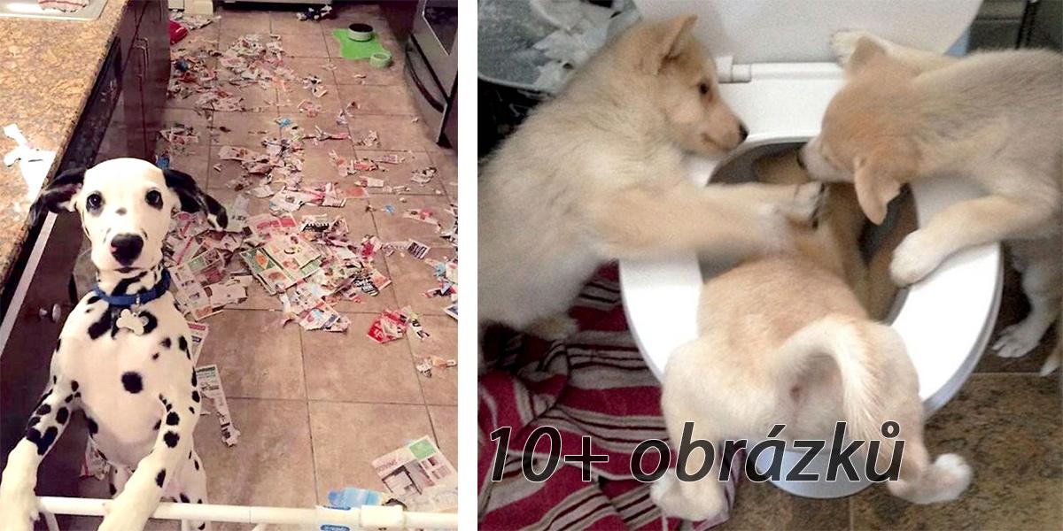 I pes může být rošťák! ツ (15 obrázků)