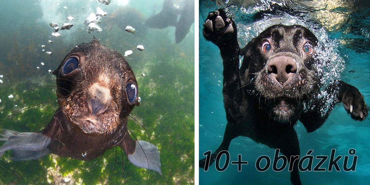 Tuleň je vlastně mořské štěně! ツ
