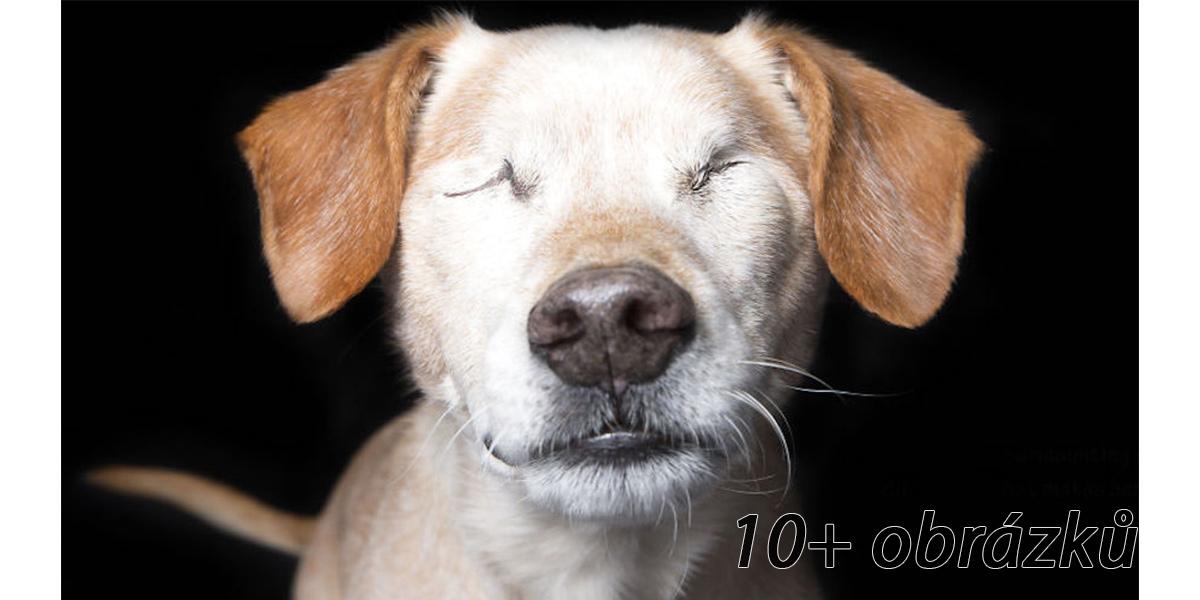 Perfektní nedokonalosti: fotograf zachycuje krásu psů s postižením
