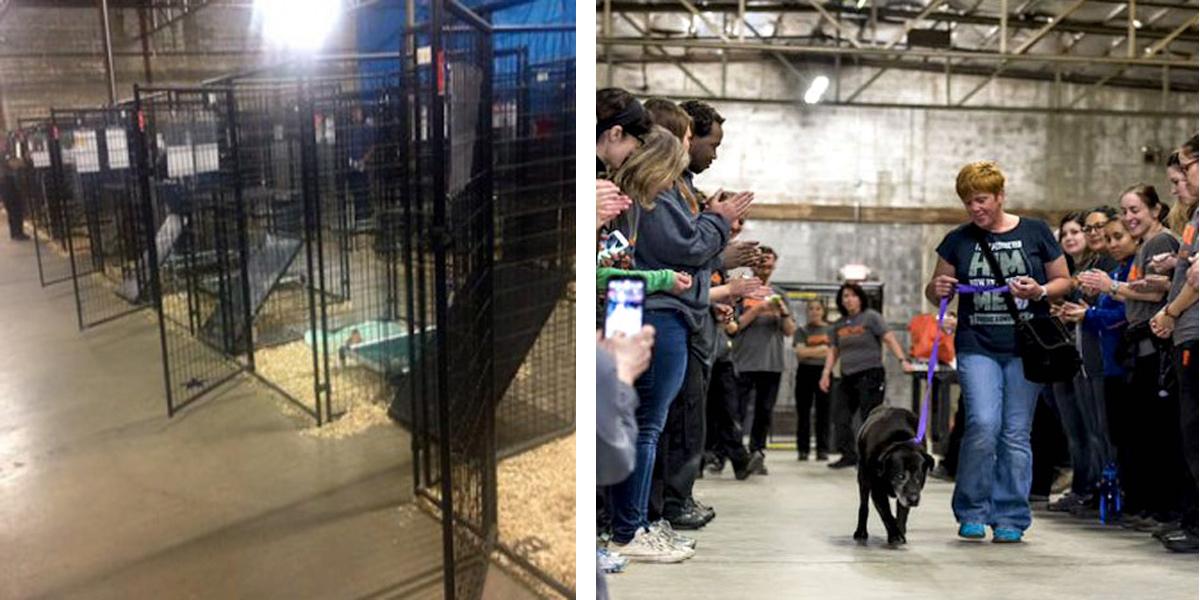 524 psů a koček se zúčastnilo velkolepé adoptivní události a všichni našli nový domov!