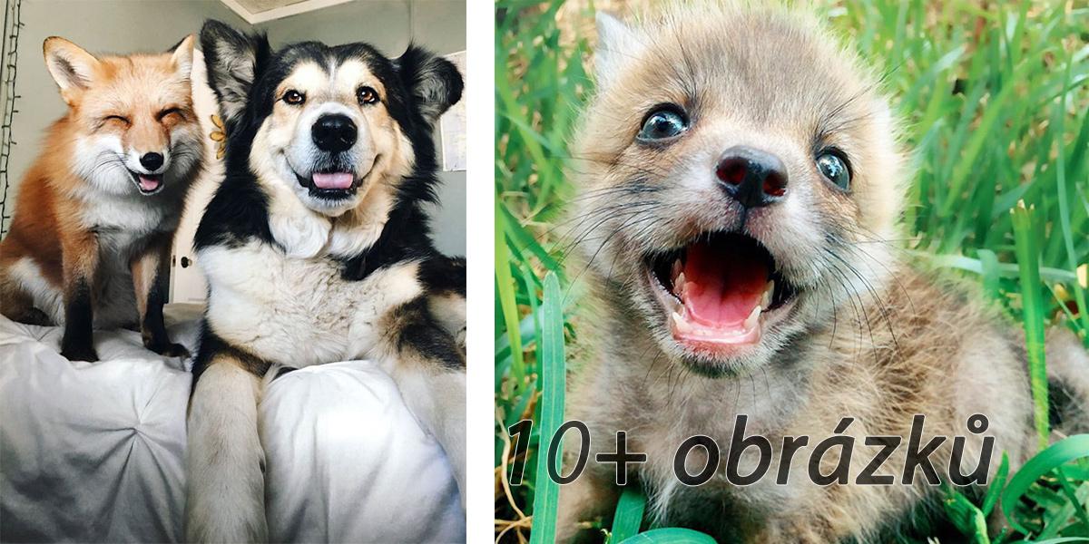 Liška se stala nejlepším kamarádem psa ツ