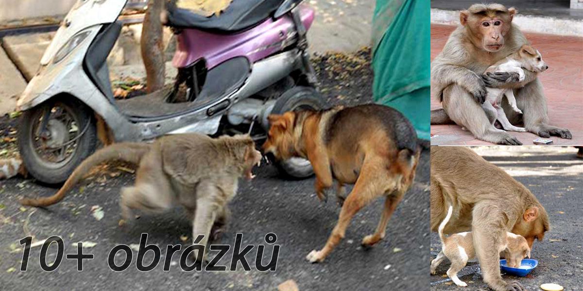 Opice zachránila opuštěné štěně, ujala se ho a nechává mu i vlastní jídlo