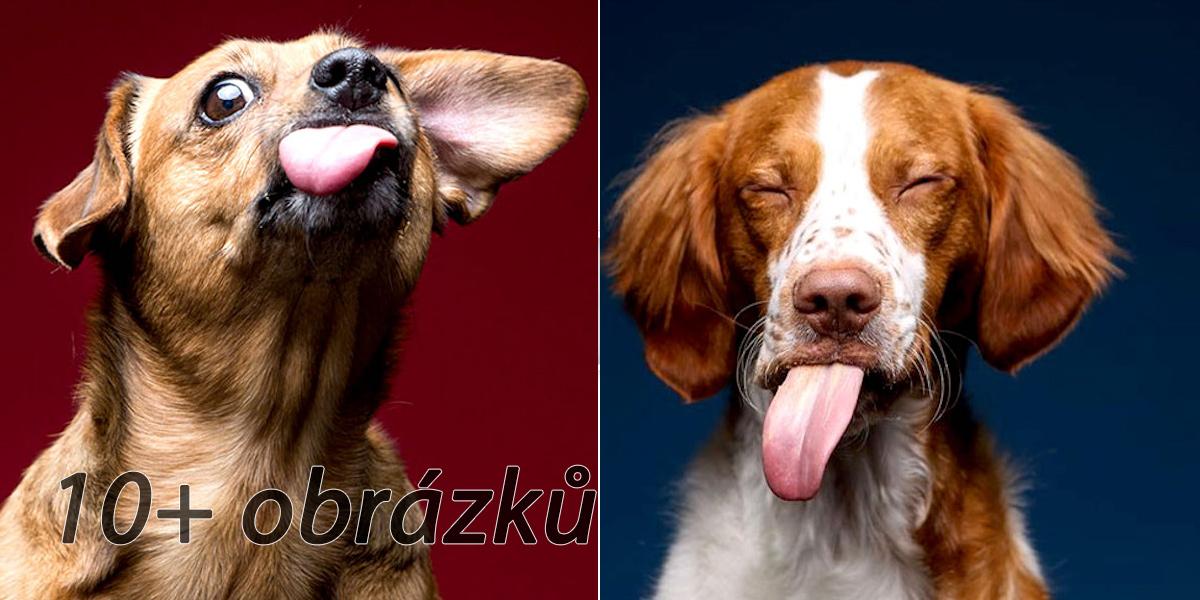 13 úžasných fotografií psů, kteří ochutnali burákové máslo