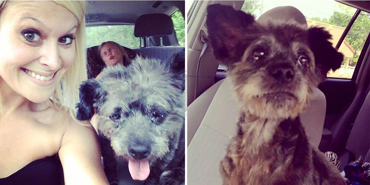 """Tahle žena se slitovala nad psem s rakovinou, poslední dny mu udělala """"nebeské"""""""