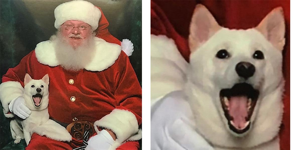 Pes si zamiloval plyšáka Santa Clause, jeho reakce na živého Santu obletěla USA