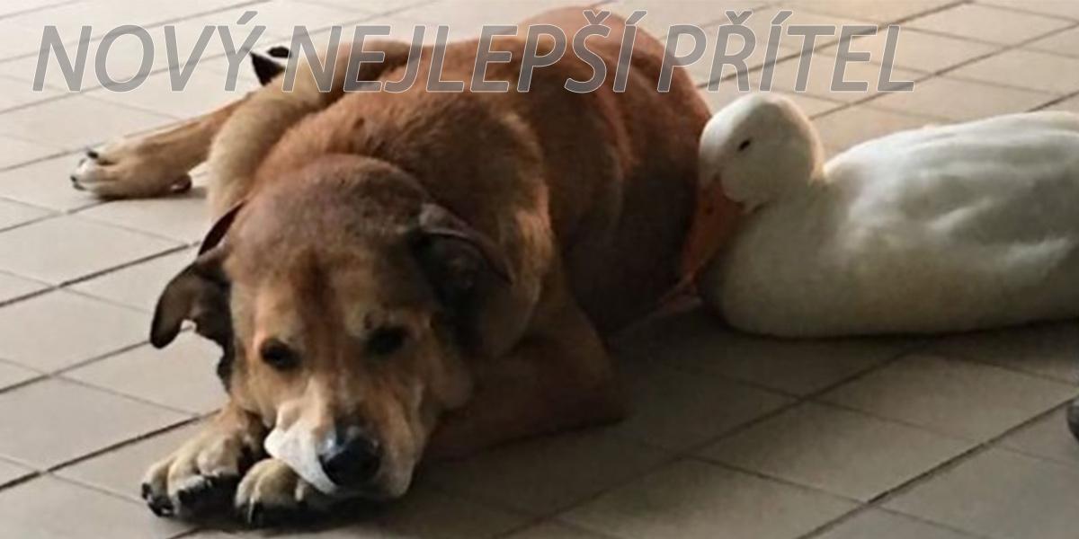Po smrti nejlepšího přítele byl 2 roky v depresi, poté mu náladu zvedla tahle kachna ツ