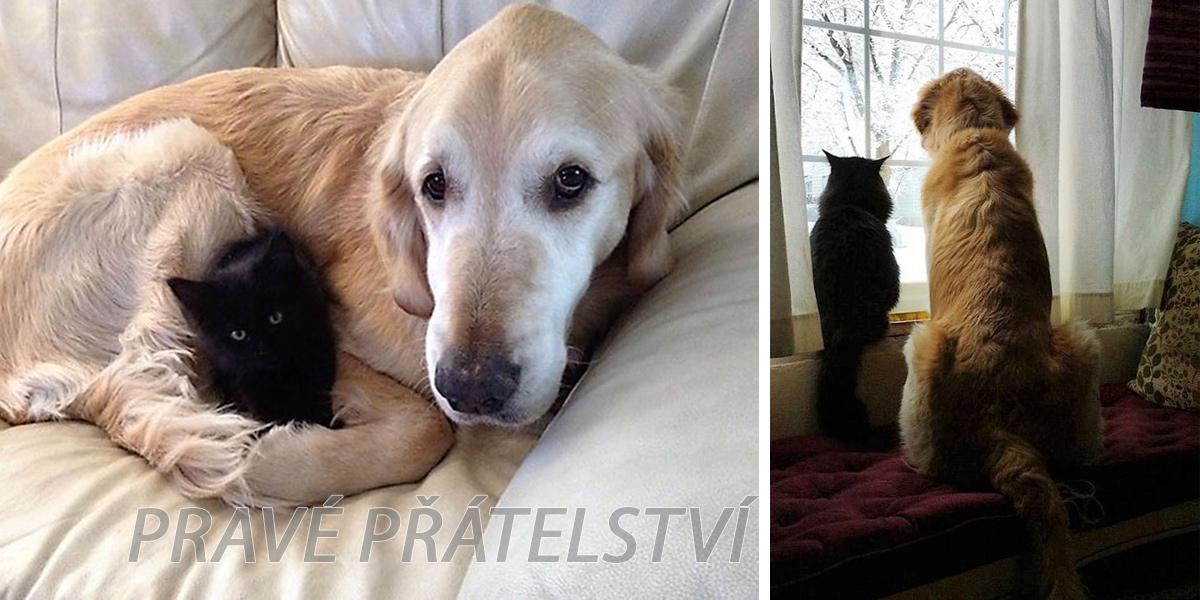 Pes ztratil svoji nejlepší kočičí kamarádku kvůli rakovině, ale poté dostal úžasné kotě ツ