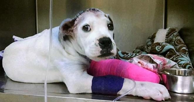 Zachráněný pes chlácholí svého zraněného kamaráda, který si také prošel peklem
