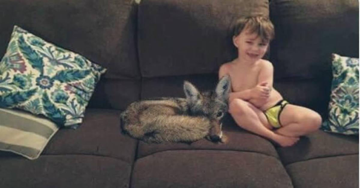 Manželka sdělila svému muži, že zachránila opuštěné štěně, ale na fotografiích byl kojot, manžel se vážně vyděsil