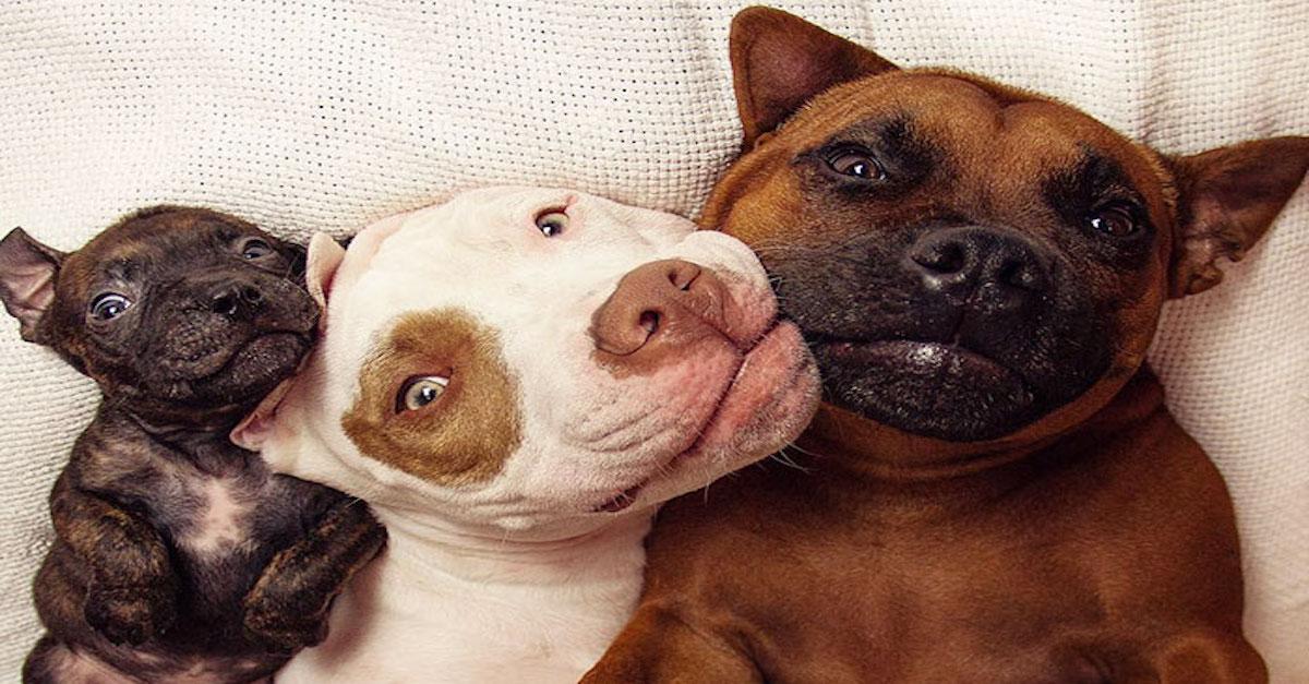 Záchranářští psi adoptovali kachny a teď i Bramboru! ツ