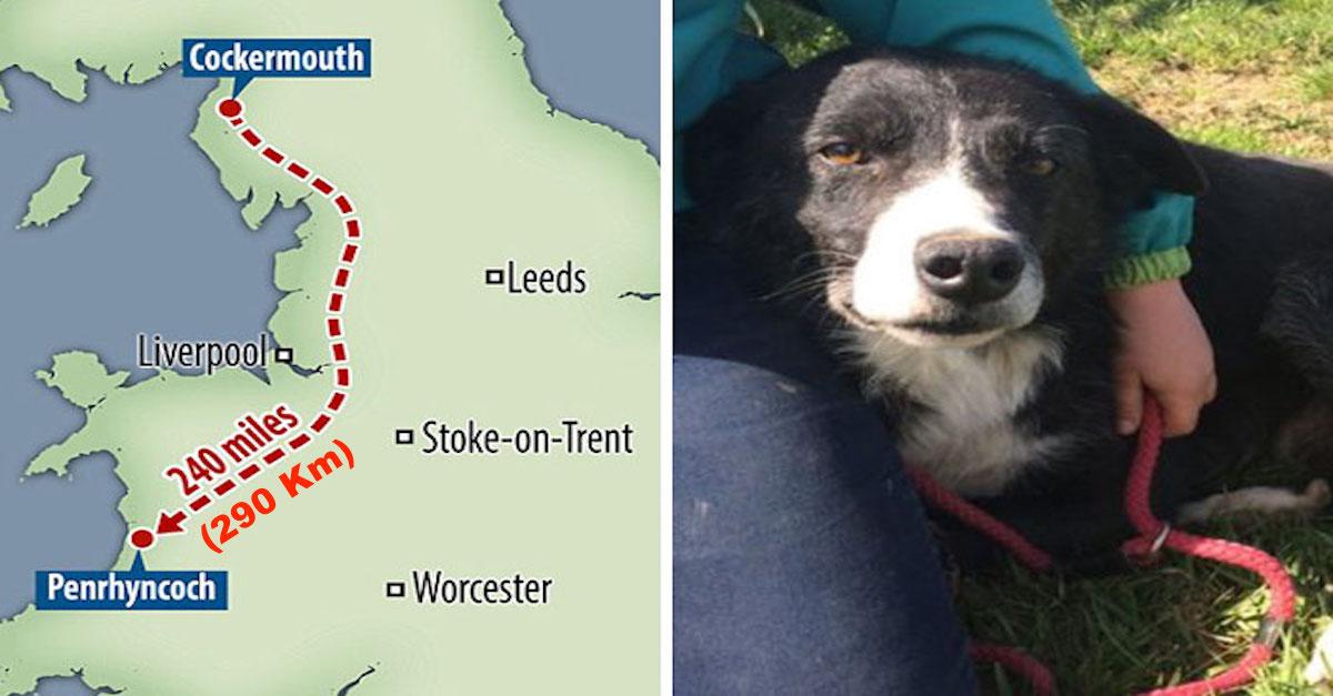 Smutný pes ušel 290 km během 12ti dní, aby znovu uviděl svého majitele