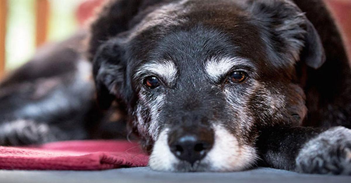 Nejstarší pes na světě zemřel ve věku 30ti let