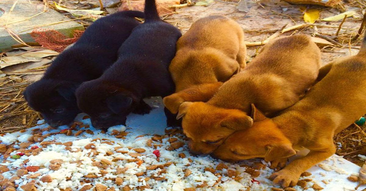 Krmí přes 80 opuštěných psů, protože neunese myšlenku, že by hladověli