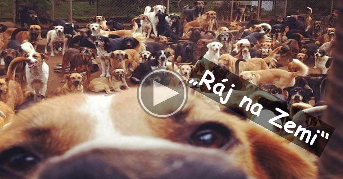 """""""Země opuštěných psů"""" v Kostarice je sedmé nebe (nejen) pro všechny nechtěné psy"""