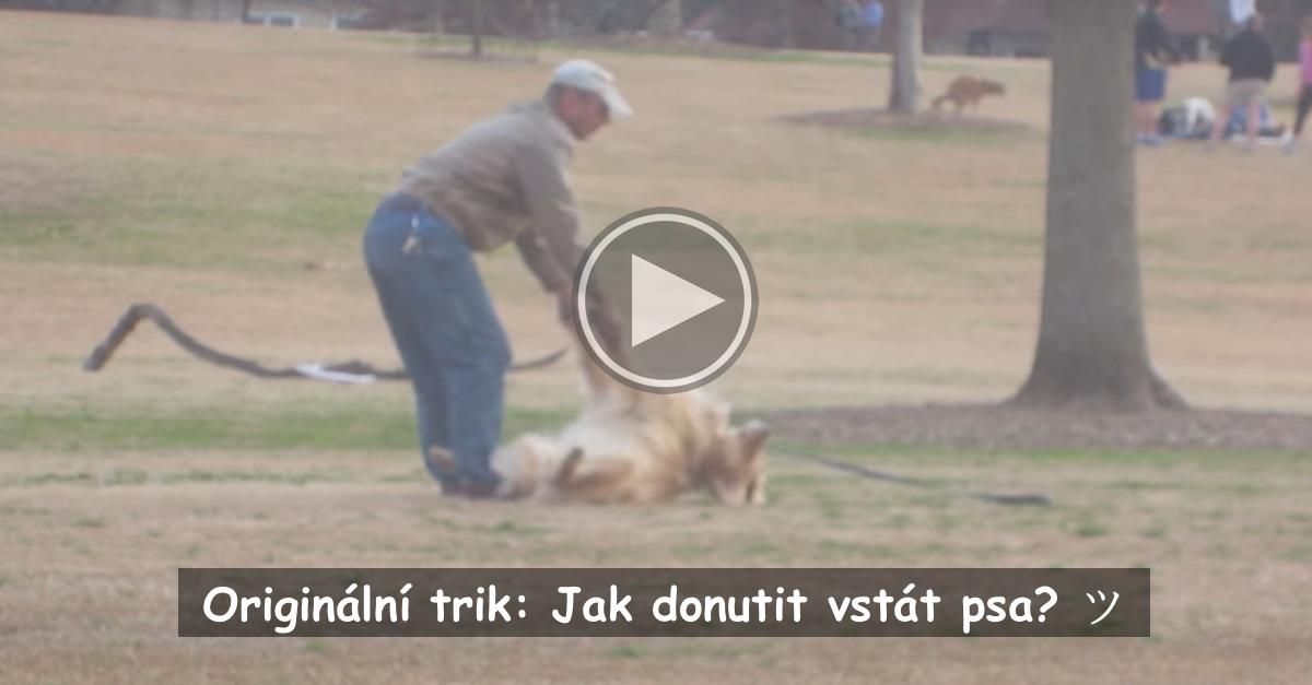 Chytrý pes hraje mrtvého, aby si v parku mohl hrát déle ツ
