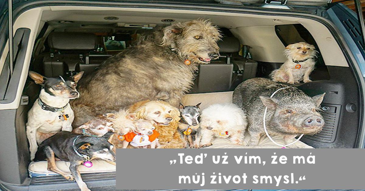 Muž zasvětil svůj život starým psům, které nikdo nechtěl