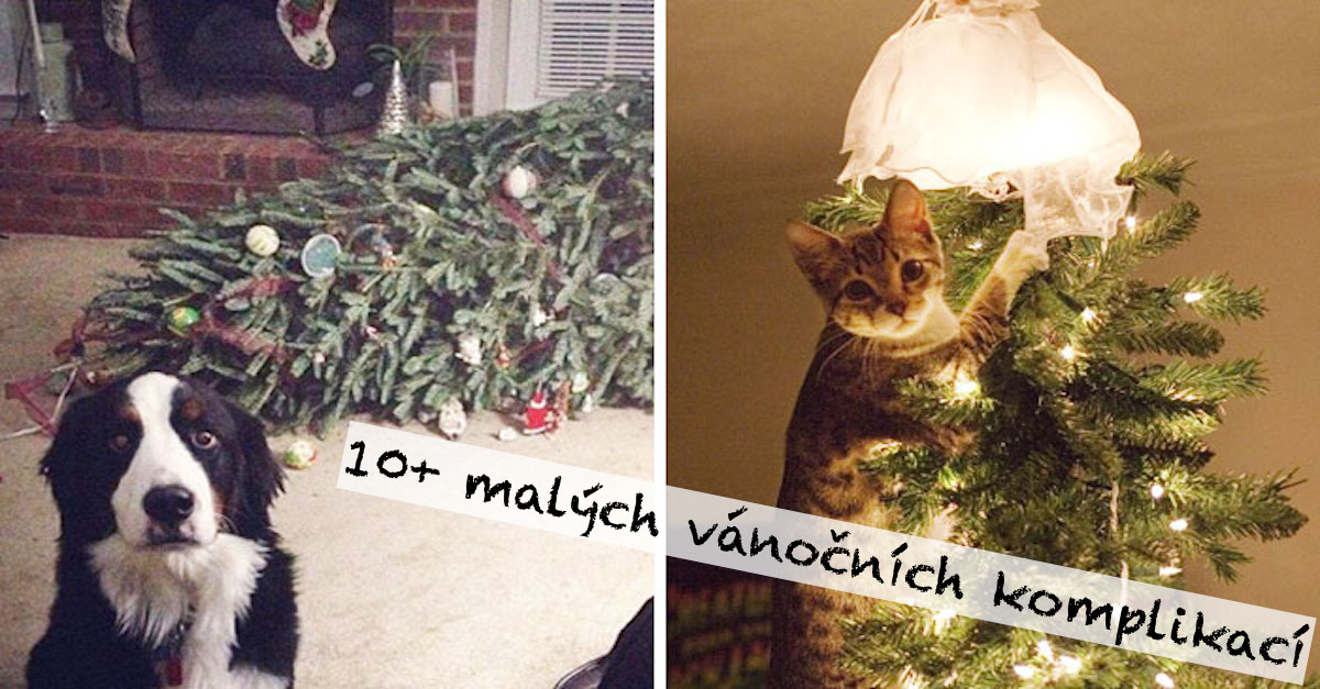 10+ psů a koček, které zruinovali vánoční stromeček