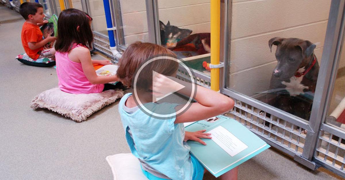 Děti v rámci výuky procvičují čtení před bázlivými psy v útulcích